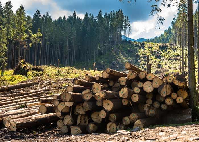 Deforestation and forest degradation factors